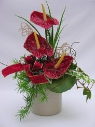 Антуриум – «цветок-фламинго»