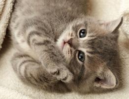Девять причин завести кошку