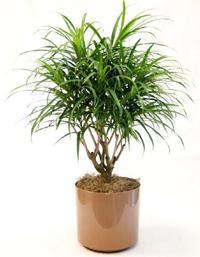ТОП-7 комнатных растений для лентяйки