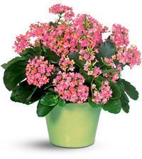 Несколько причин полюбить комнатные растения