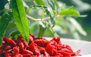 Годжи – ягоды бессмертия