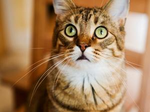Как бороться с аллергией на кошек