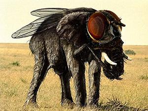 Как сделать из мухи слона?