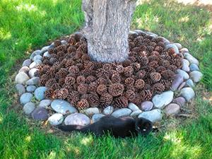 Мульчирование. Декоративное садоводство.