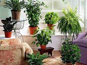 ТОП-10 полезных комнатных растений